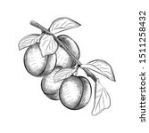 Branch Of Plum Tree With Its...