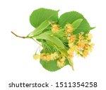Linden Flowers With Leaf...