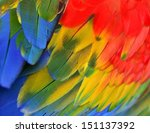 Bright Color Of Scarlet Macaw...