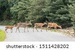 Group Of White Tailed Deer ...