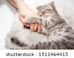 Cat Love By The Hand Grip At...