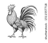 engraved rooster. roosters... | Shutterstock .eps vector #1511557718