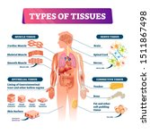 types of tissues vector... | Shutterstock .eps vector #1511867498