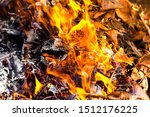 Dry Leaves On Fire   Domestic...