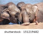 two elephants show good... | Shutterstock . vector #151219682