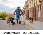 Stock photo professional dog walker or pet sitter walking a pack of cute different breed and rescue dogs on 1512262832