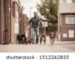 Stock photo professional dog walker or pet sitter walking a pack of cute different breed and rescue dogs on 1512262835