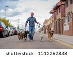 Stock photo professional dog walker or pet sitter walking a pack of cute different breed and rescue dogs on 1512262838