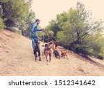 Stock photo professional dog walker or pet sitter walking a pack of cute different breed and rescue dogs on 1512341642