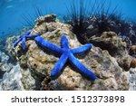 Underwater World. Two Blue Sea...