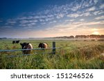 Cows And Bull On Summer Pastur...