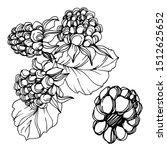 vector blackberry healthy food. ...   Shutterstock .eps vector #1512625652