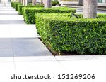 garden plant decor | Shutterstock . vector #151269206