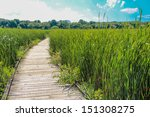 Wooden Walk Way In Middle Of A...