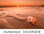 Caribbean Beach And Large Shell ...