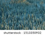 Dark Coniferous Forests  Borea...