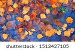 Colourful Fall Leaves In Pond...