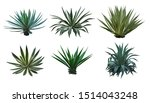 Agave Collection Isolated On...