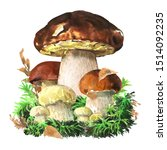 Group Of Forest Edible Boletus...