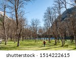 A hiker walks through the forest of the spa of Panticosa, in the Pyrenees Mountains (Spain).