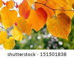 Tree Branch With Autumn Leaves. ...