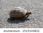 Stock photo very cute tortoise is walking on the road 1515143822