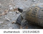 Stock photo very cute tortoise is walking on the road 1515143825