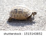 Stock photo very cute tortoise is walking on the road 1515143852