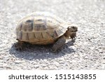 Stock photo very cute tortoise is walking on the road 1515143855