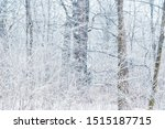 Winter Forest Trees  Covered...