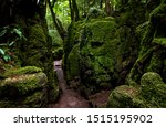 The Moss Covered Rocks Of...