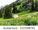 Albion Basin  Utah Summer With...