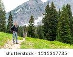 Albion Basin  Utah Pine Trees...