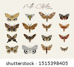 Moth Collection  Hand Draw...
