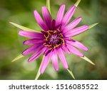 Heart Of A Purple Common...
