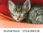 Stock photo one little sibling kittens sleep side by side cute kitten fed by a man sleeping babies kittens 1516168118