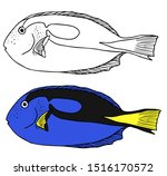 Blue Tang Illustration And Lin...