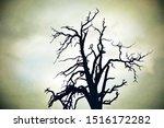 Spooky Dead Tree Silhouette ...