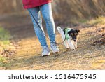 Stock photo woman is walking with a small obedient jack russell terrier dog in the autumn forest 1516475945
