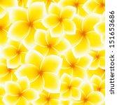 plumeria  frangipani pattern ... | Shutterstock .eps vector #151653686