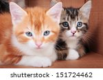 Two Kittens On A Cardboard...