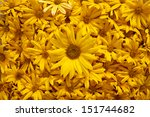 carpet of yellow flowers | Shutterstock . vector #151744682