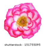 rose bouquet for love gift... | Shutterstock . vector #151755095