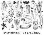 hand drawn vegetables... | Shutterstock .eps vector #1517635802
