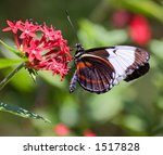 Butterfly On Flower In Costa...