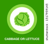 vector cabbage or lettuce... | Shutterstock .eps vector #1517959145