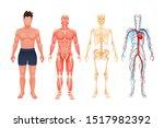 human body anatomy man. visual...   Shutterstock .eps vector #1517982392