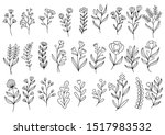 collection forest fern... | Shutterstock .eps vector #1517983532