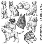 Set Of Hand Drawn Ink Dogs...