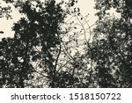 tree and branches silhouette.... | Shutterstock .eps vector #1518150722